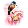 Птицы - яйца, гнезда, птенцы, куры. гуси, утки, павлины и проч.